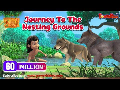 Jungle Book Hindi Cartoon for kids | Jungle| Mogli Cartoon Hindi |  Journey to the nesting grounds