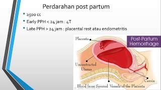 Plasenta memiliki peran penting selama periode kehamilan karena menjadi salah satu faktor penentu ba.