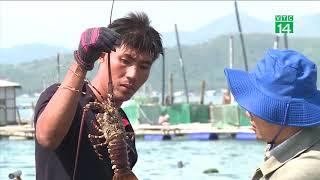 VTC14 | Tôm hùm chết hàng loạt ở Phú Yên
