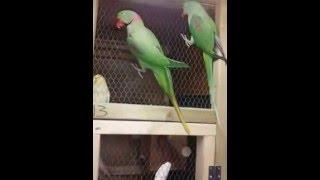 Parrot Bird farm