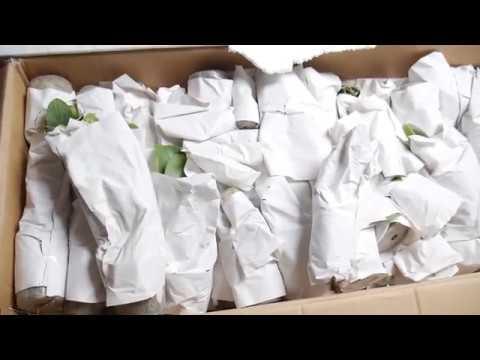 Орхидея: Наш первый заказ от РОМ. Орхидеи Азии.