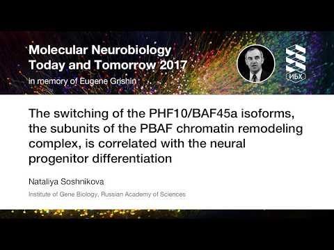 The switching of the PHF10/BAF45a isoforms is correlated with the neural progenitor differentiation