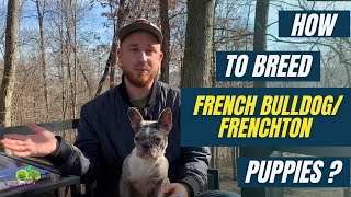 How to Breed French Bulldog, Frenchton or Boston Terrier Puppies: Breeding Process and Giving Birth