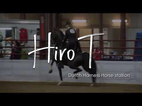 Hiro-T
