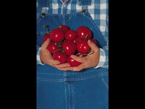 The Organic View Radio Show: How To Grow The Perfect Heirloom Tomato