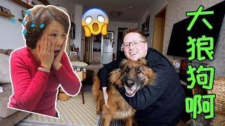 我中国岳母吓死了,我领养了一条15岁的德国牧羊犬! thumbnail