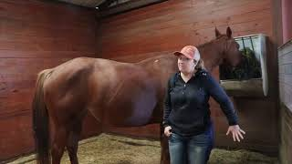 Foaling signs to look for by Nikki Cain