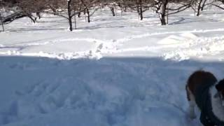 桃畑で雪遊び。