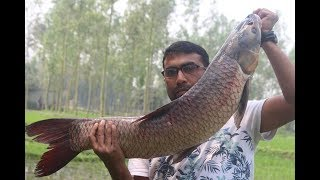 10 kg big fish curry and farm fresh potato  | Village food recipe | River monster