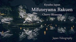 [4K]Mifuneyama Rakuen 御船山楽園 花まつり 九州最大の夜桜ライトアップ Night Cherry Blossoms in Saga Japan 佐賀県武雄温泉 日本の風景