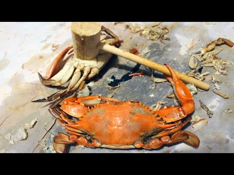 BLUE CRABS!!! How to catch crabs - How to cook and eat crabs