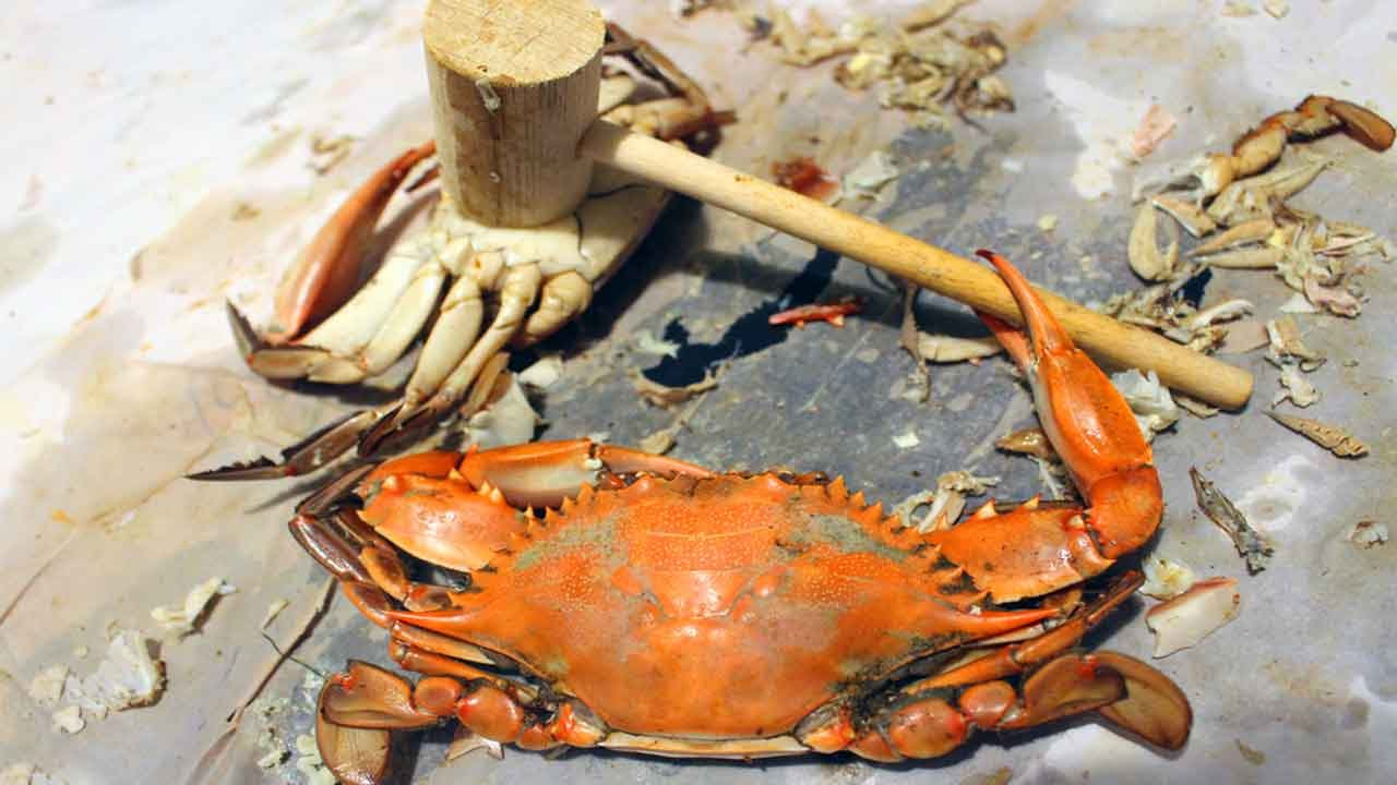 10 Blue Crab Hacks Worth Knowing! | Guy Counseling
