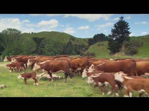 MORRISON FARMING - Rural Delivery 2016