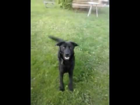 Sztuczki mojego psa/Tricks of my dog - 1#