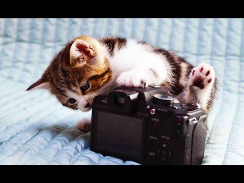 ТОП подборка с забавными  котами , кошками , котиками, котэ и котятами | Коты Приколы