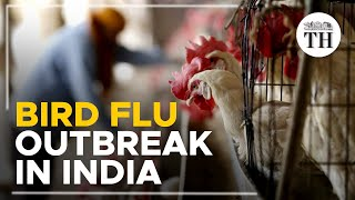 All about the bird flu outbreak in India