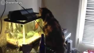 Смелая рыбка против кошки