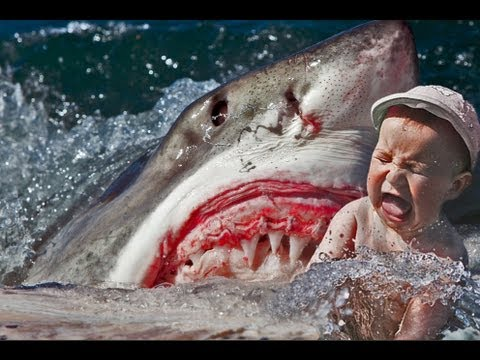DEADLY SHARK ATTACK CAUGHT ON TAPE 18 ONLY  HUMAN EATEN!!  YouTube