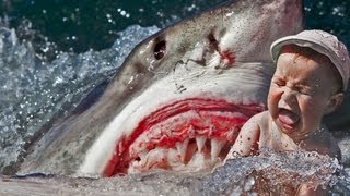 DEADLY SHARK ATTACK CAUGHT ON TAPE 18+ ONLY - HUMAN EATEN!!