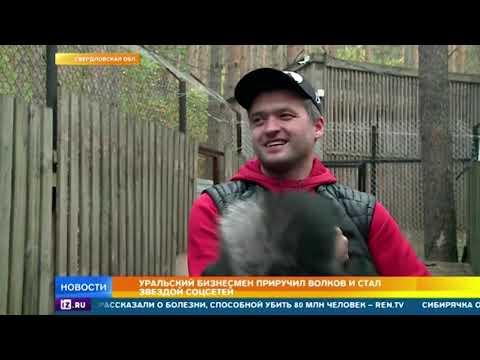 Уральский бизнесмен приручил стаю волков и стал звездой соцсетей