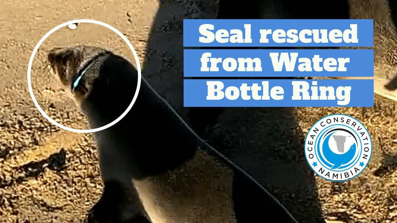 Seal RESCUED from PVC PIPE (+3 more rescues)