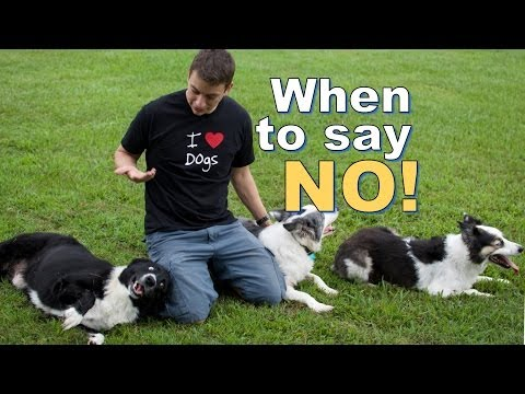 How, When and Why I say 'NO' to my dogs.