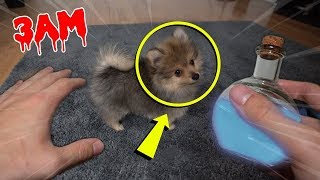 (IT WORKED) ORDERING PUPPY POTION FROM THE DARK WEB AT 3AM!! *CRAZY TRANSFORMATION*
