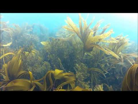 Our Scuba Trips | Doolin & Miltown Malbay Dive