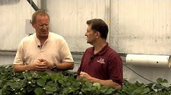 Video 11. Arizona Pest and Disease Control in Greenhouse Strawberries