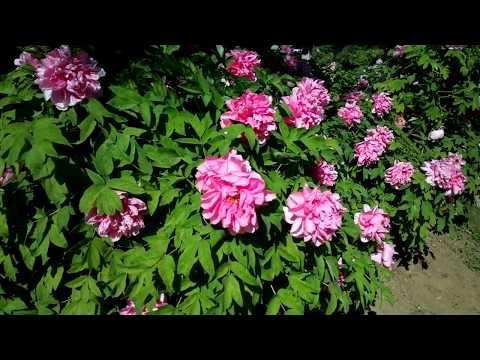 中科院植物园 Chinese Academy of Sciences Botanical Garden 10