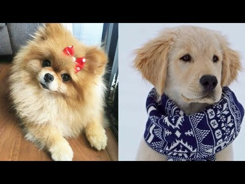 Funny Dogs Video Compilation 2018 #3