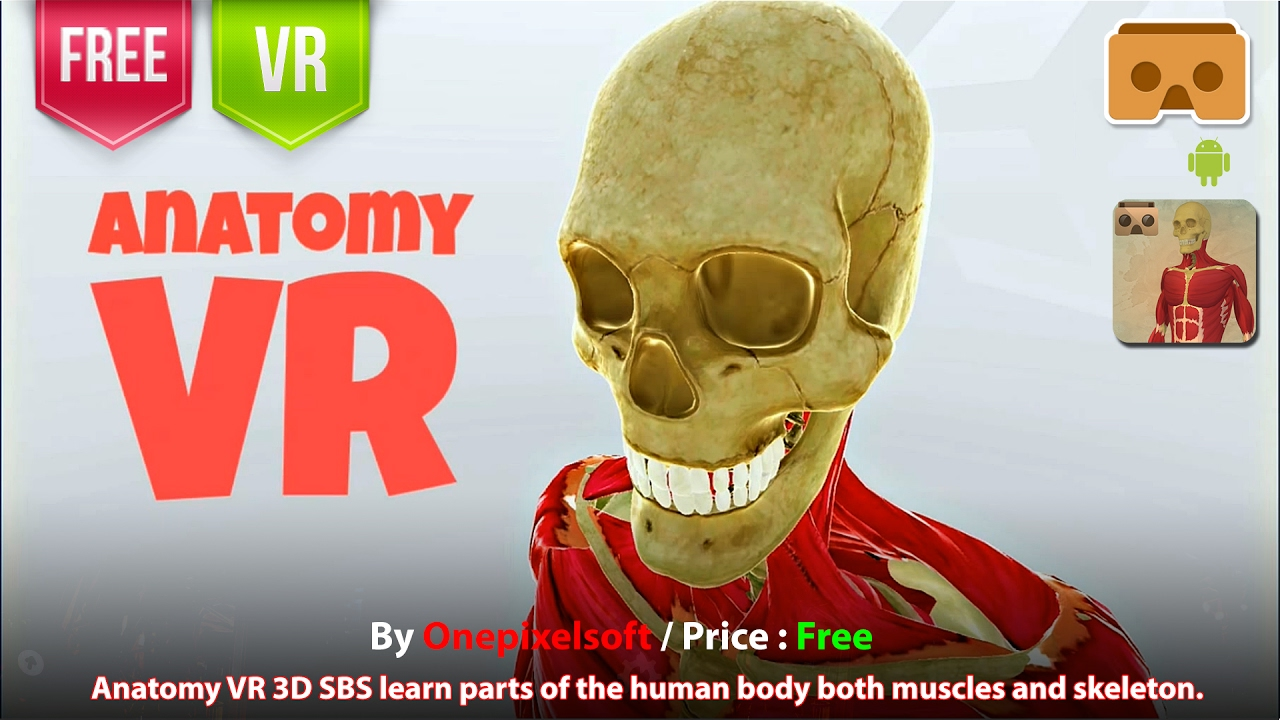 Anatomy Vr Google Cardboard Learn Parts Of The Human Body Both Muscles And Skeleton