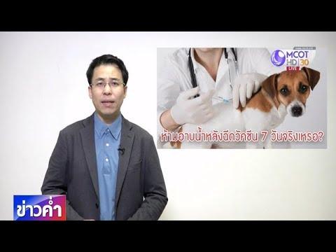 ชัวร์ก่อนแชร์ : ห้ามอาบน้ำสุนัขหลังฉีดวัคซีน จริงหรือ ?