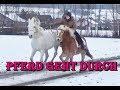 🦄 CASTOR geht durch - Reiten mit Handpferd 🦄