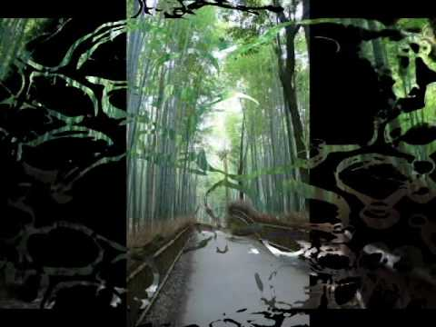 All You Need To Know About: Sagano Bamboo Forest, IN RIVER