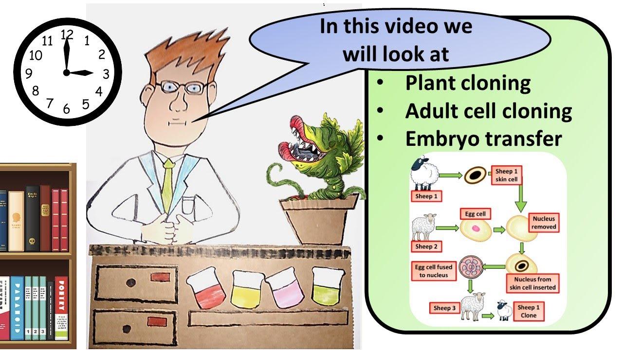 GCSE Biology Cloning Revision - YouTube