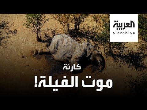أسوأ كارثة تحيط بالفيلة في القرن الحالي  - نشر قبل 2 ساعة