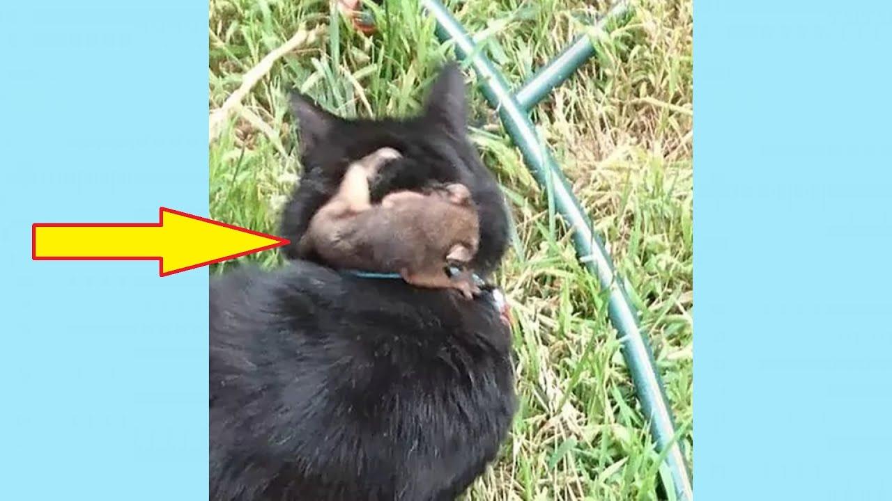 Когда кот вернулся с прогулки, хозяин обнаружил на шее своего питомца странного крошечного зверька - скачать с YouTube бесплатно