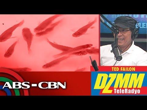 Fish Vs Dengue: Experts Tap 'kataba' To Eat Mosquito Larvae | DZMM