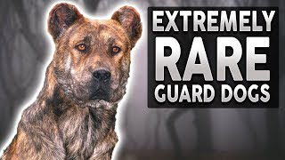 10 EXTREMELY RARE Guard Dog Breeds!