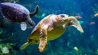 12 Hours of Stunning Aquarium Relax Music, Beautiful Aquarium Coral Reef Fish, Relaxing Ocean Fish