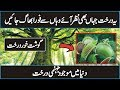 World Most Dangerous Trees In Urdu Hindi | The Manchineel and Carnivorous Plants
