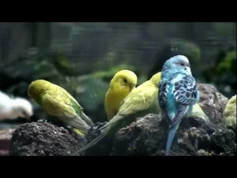 Bird Songs & Relaxing Music