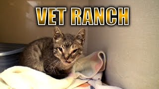 Severely Injured Kitten Gets a Second Chance