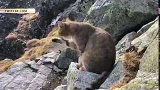 Альпинист, взойдя на самую высокую точку Польши, обнаружил там мирно умывающегося домашнего кота
