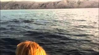 Delfini Rab 2013