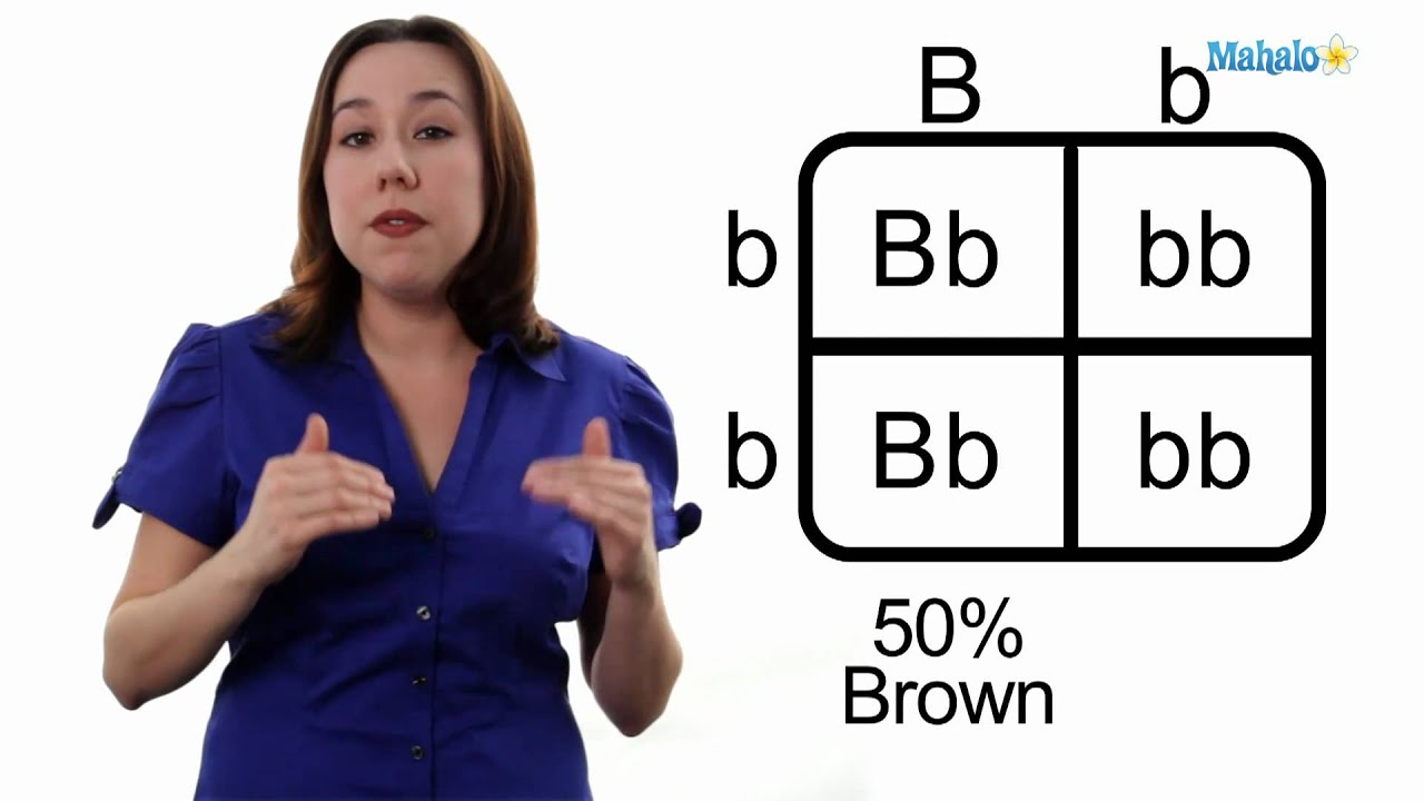 Square Eye Color Worksheet Learn biology: how to draw a punnett square ...