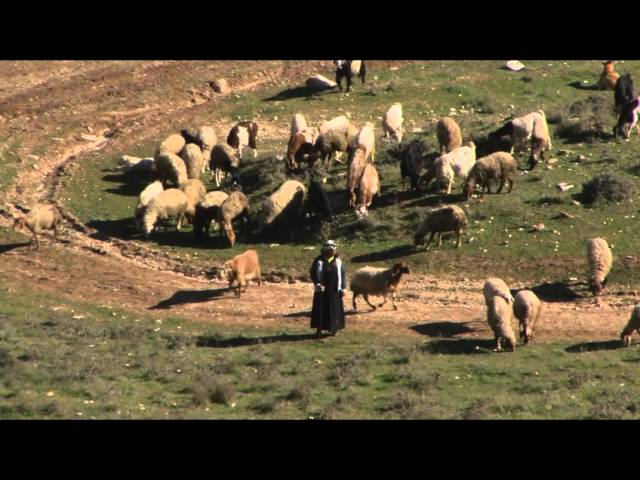 """How """"green pastures"""" in Psalm 23 is interpreted"""