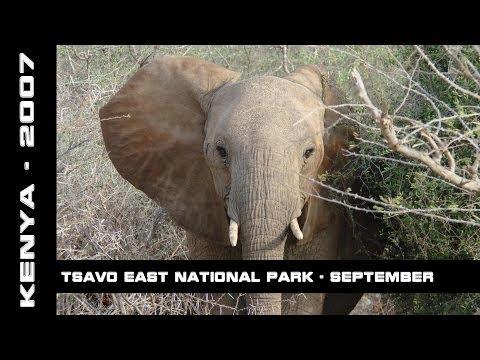 Tsavo East National Park, Kenya, September 2007