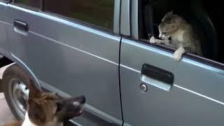 Những con vật hài hước part_3 | Đại chiến chó mèo | không thể nhịn cười